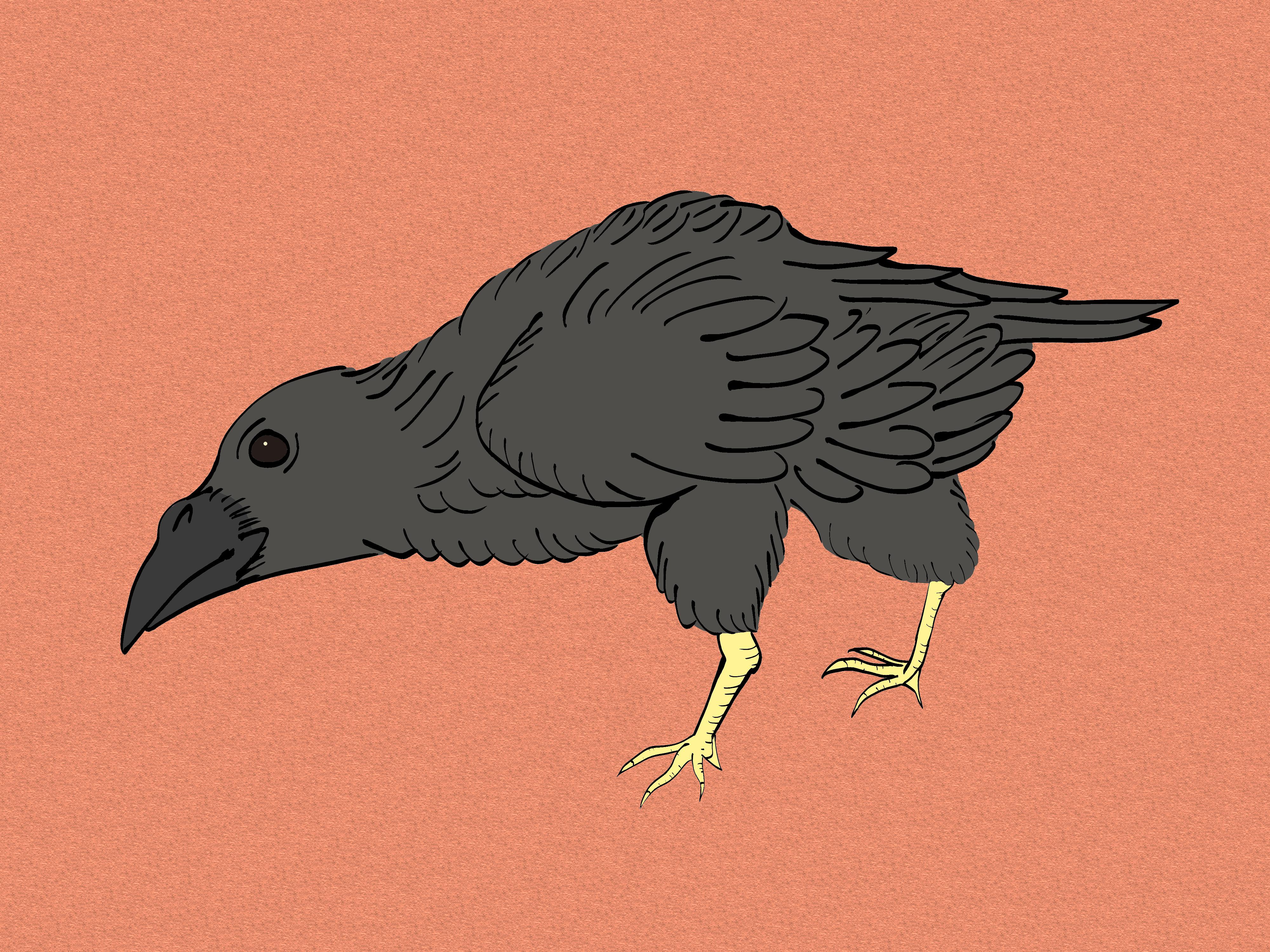 Crow Raven -ukiyo-e Color-(からす) by RedSparkle (11-2019)