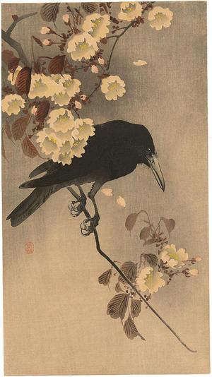 Crow on a cherry branch by Shoson Ohara - ukiyo-e